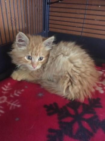 Man gooit kitten uit auto, dierenasiel zoekt getuigen