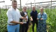 'Zomer van Hoogstraten' wil inwoners eigen stad laten ontdekken