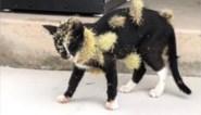 Kat komt op pijnlijke manier te weten dat ze beter wegblijft van cactussen