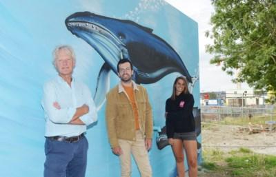 """""""Tijd voor street art in Oudenaarde: het is hip en brengt kleur in de stad"""""""