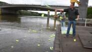 Onderzoekers gooien fluo plastic in de Schelde