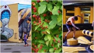 Zomertips in Gent: zelf fruit plukken, ROA spotten of in het springkastelenpark