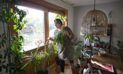 Hoe bescherm ik mijn kamerplanten tegen de zon?