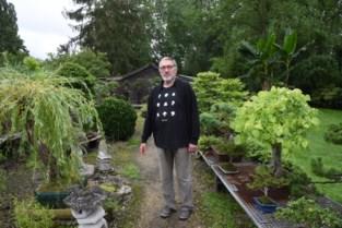 """André (68) zet deuren van Bonsai-ateljee open voor liefhebbers: """"Elk boompje heeft zijn verhaal"""""""