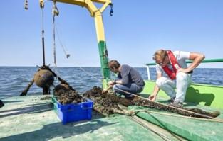 Na protest gemeente en vissers: Colruyt moet extra onderzoek doen naar effect van komst mosselboerderij op visserij