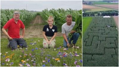 """De hele zomer verdwalen in drie hectare maïs: """"Grondplan in de vorm van coronavirussen"""""""