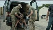 """Mishandelingen in opleiding paracommando gaan van kwaad naar erger: """"Als niemand instructeurs op de vingers tikt, zullen wantoestanden escaleren"""""""