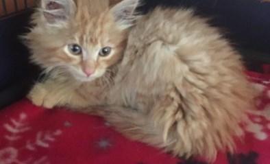 Honderden adoptie-aanvragen, maar nul tips voor katje dat uit auto gegooid werd