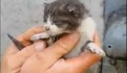 Man boort gat in muur om kitten te bevrijden