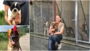 """Vernieuwd hondenasiel krijgt minder geblaf: """"Ze hebben duidelijk minder stress"""""""