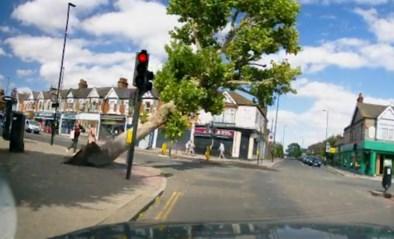 Voetgangers kunnen omvallende boom op het nippertje ontwijken