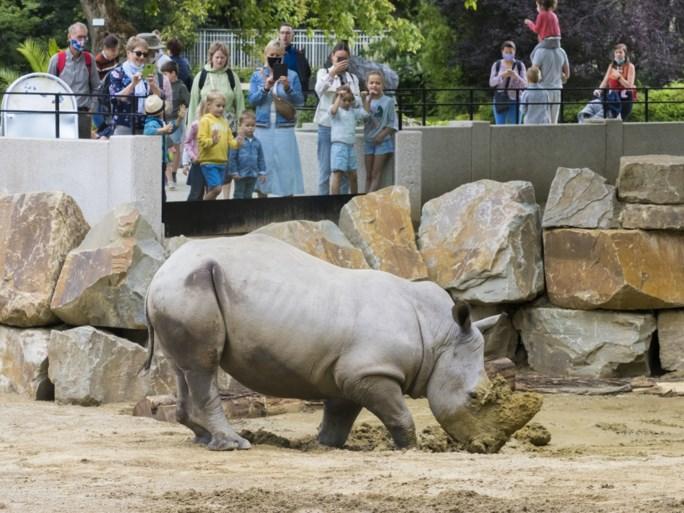 Historisch Rundergebouw in Zoo in nieuw jasje voor komst van twee witte neushoorns