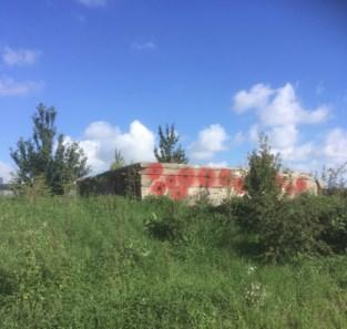 Oude oorlogsbunker beklad met klaprozen