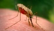 """Alle aandacht ging naar het coronavirus, en dus wordt er gevreesd voor meer doden door aids, tuberculose en malaria: """"Inspanningen van jaren ongedaan gemaakt"""""""
