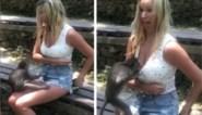 Onbeschaamd aapje zoekt naar eten op wel erg ondeugende plaats bij vrouw