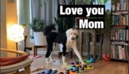"Hond leert communiceren met baasje via soundboard: ""I love you!"""