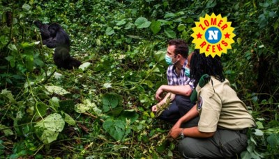 """Onze man staat oog in oog met de berggorilla's in het Virungapark: """"Les één: staar nooit terug"""""""