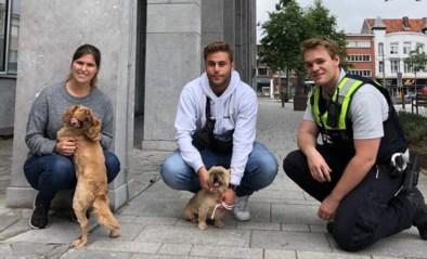 Politie neemt hondjes in beslag die in te kleine ruimtes werden geplaatst