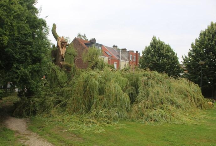"""Honderd jaar oude treurwilg gaat tegen de vlakte in speeltuin: """"Gelukkig is er niemand onder de boom beland"""""""
