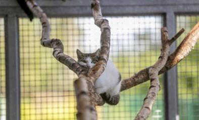 Adopteren op afspraak in dierenasielen is groot succes