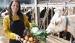 Superburen brengt lokale producenten en klanten samen