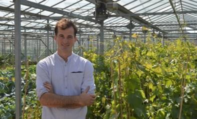"""Brecht (23) bouwt grootste druivenserre van het land: """"Heel wat voormalige kwekers hebben mij hun familiegeheimen toevertrouwd"""""""