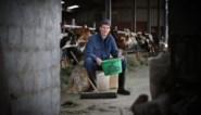 Voor het eerst in 20 jaar meer Limburgse landbouwers: