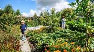Een siertuin, een moestuin én een bosgedeelte: welkom in de tuin des overvloeds van Luc en Marleen