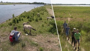 De mooiste wandelroutes van België: op avontuur in het walhalla voor vogelaars, al kom je er ook andere dieren tegen