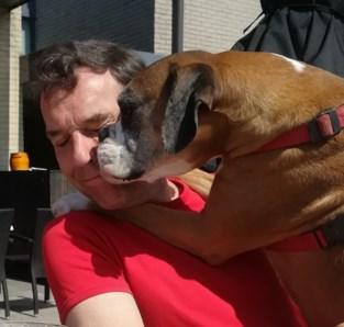 """Agressieve honden bijten 8-jarige boxer dood in Deurne: """"Ze vielen uit het niets aan"""""""