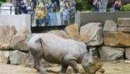 Mondmasker ook verplicht in hele Antwerpse Zoo en Planckendael