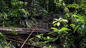 Recordaantal milieuactivisten vermoord in 2019