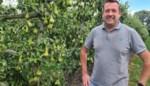 """Fruitgemeenten vragen steun van overheid voor fruitseizoen dat coronaproof is: """"Voldoende testen en containers om plukkers in quarantaine te zetten"""""""