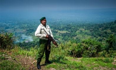 Tientallen ontvoeringen bij Virungapark in Congo: gefolterd en verkracht voor losgeld