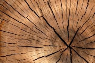 Merchtem organiseert openbare verkoop van hout