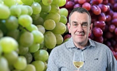 Wat maakt een Chardonnay nu zo anders dan een Sauvignon blanc? De impact van de druif op je wijn