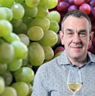 Wat maakt een Chardonnay nu zo anders dan een Sauvignon blanc?