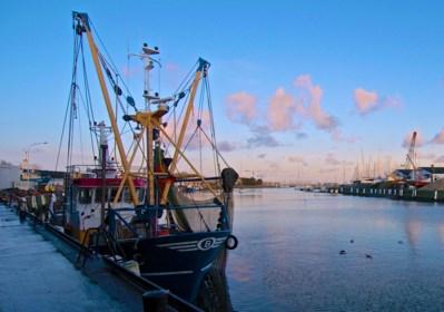 Belgische vissers vangen minder schol, maar meer tong en rog