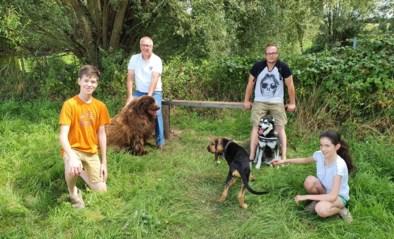 """Filip richt zelf losloopweide in voor honden: """"Het is een echte verkiezingsbelofte"""""""