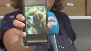 Hondenkoekjes om personen met een beperking te steunen