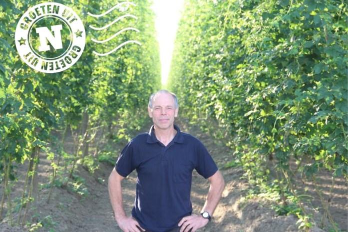 """Groeten uit een hopveld in Poperinge: """"Hop is mijn leven"""""""