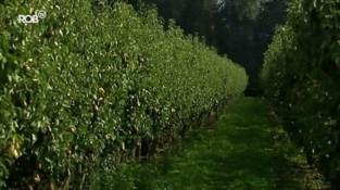 Buitenlandse seizoensarbeiders fruitpluk krijgen eerst coronatest