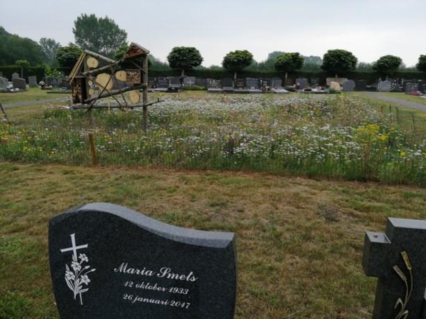 Bloemenweides en bijenhotels op kerkhoven