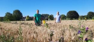 Geen insecticiden of pesticiden op ecologisch zelfplukveld, maar wel patrijzen, kieviten en zelfs steenuilen