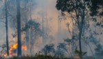 Brand vernielt stuk bos in natuurgebied Langdonken in Herselt