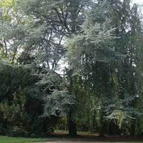 Reserveren voor tuinbezoeken in WZC De Ceder