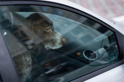 Vrouw laat hond achter in snikhete wagen: rekening van takeldienst volgt