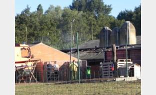Tweehonderd varkens sterven bij stalbrand