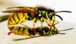 Vraag verdelging wespennest online aan