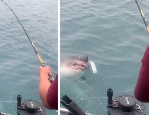 Vissers halen grote vangst binnen maar die is niet wat ze hadden verwacht